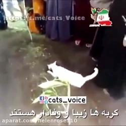گربه سوگوار-بى تابى گرب...