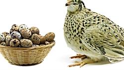 به جای تخم مرغ، تخم بلد...