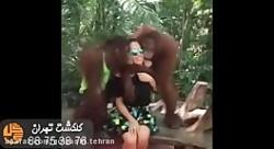 میمون های بازیگوش پارك ...