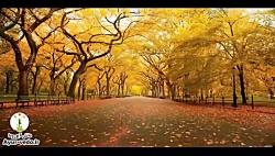 توصیه های آیورودا در فصل پاییز جهت حفظ سلامتی