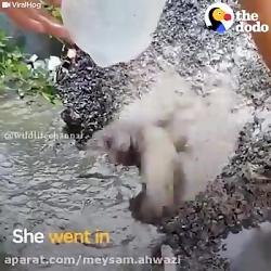 تلاش بسیار زیبا سگ و صاحب او برای نجات جان کودکش