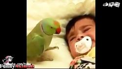 دوستی جالب بین کودکان با طوطی ها