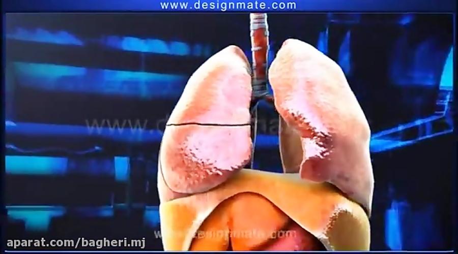تدریس-سیستم-تنفسی-انسان