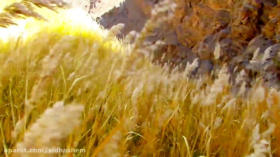 حیات وحش دره انجیر دربید