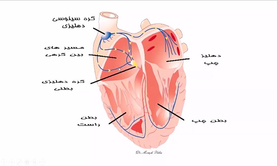 تدریس-نوار-قلب-یا-الکتروکاردیوگرافی