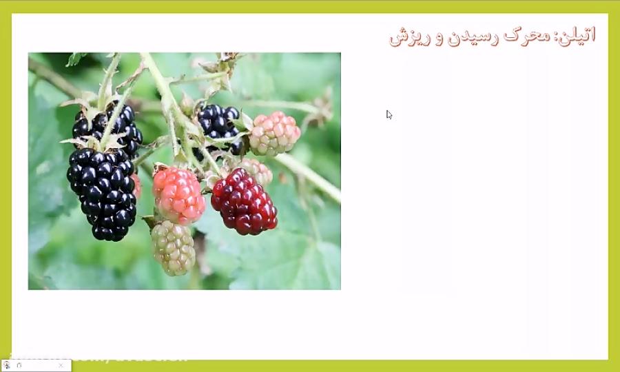 تنظیم-کننده-های-رشد-گیاهی-اتیلن-آبسزیک-اسید-و-سالیسیلیک-اسید-تدریس