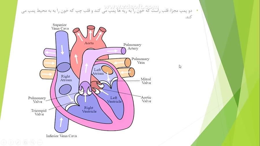 آموزش-آناتومی-و-فیزیولوژی-قلب-تدریس