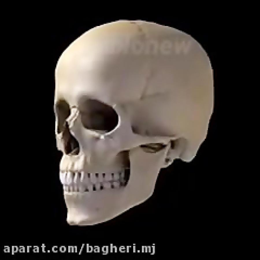 استخوان-های-جمجمه-و-چهره
