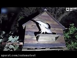 دزدی حیرت انگیز گربه از لانه جغد