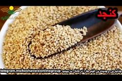 7 دانه های سالم و آجیل باید هر روز بخورید