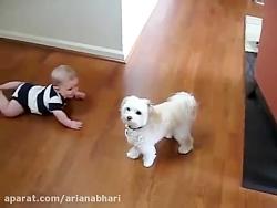 رقص سگی دیده بودی به این قشنگی ؟
