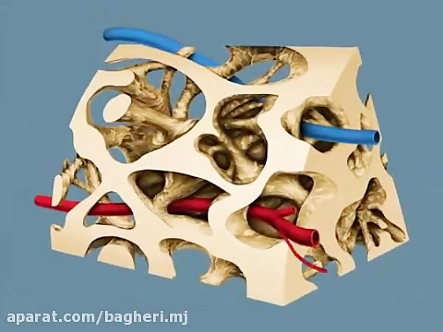 ساختار-استخوان