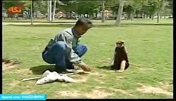 بچه میمون بامزه و حرکات نمایشی خنده دار
