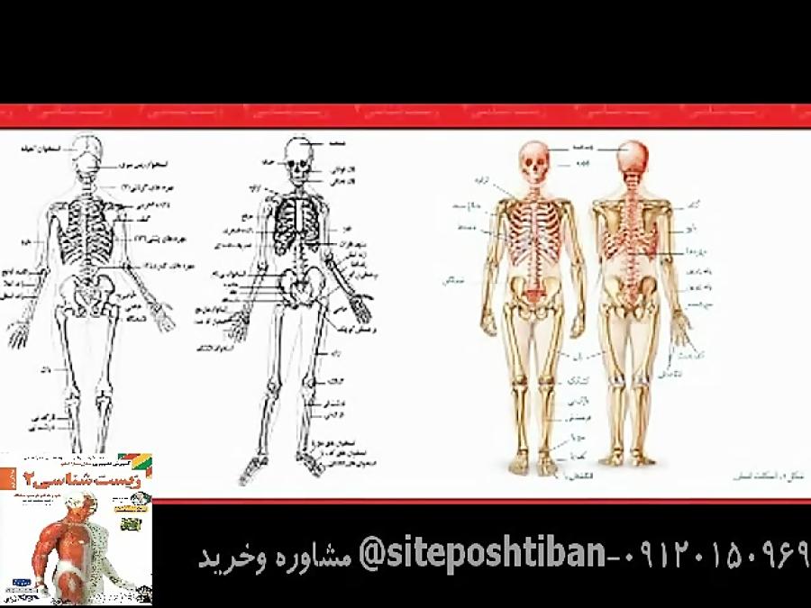 استخوان-های-اسکلت-بدن-تدریس