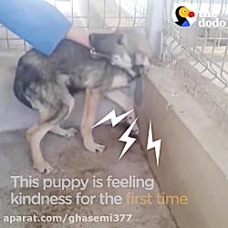 سگ گریه می کند هر بار که او را لمس می کنند