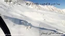 ✔️ویدئوی لحظه پیدا شدن کوهنوردان مشهدی در الیگودرز