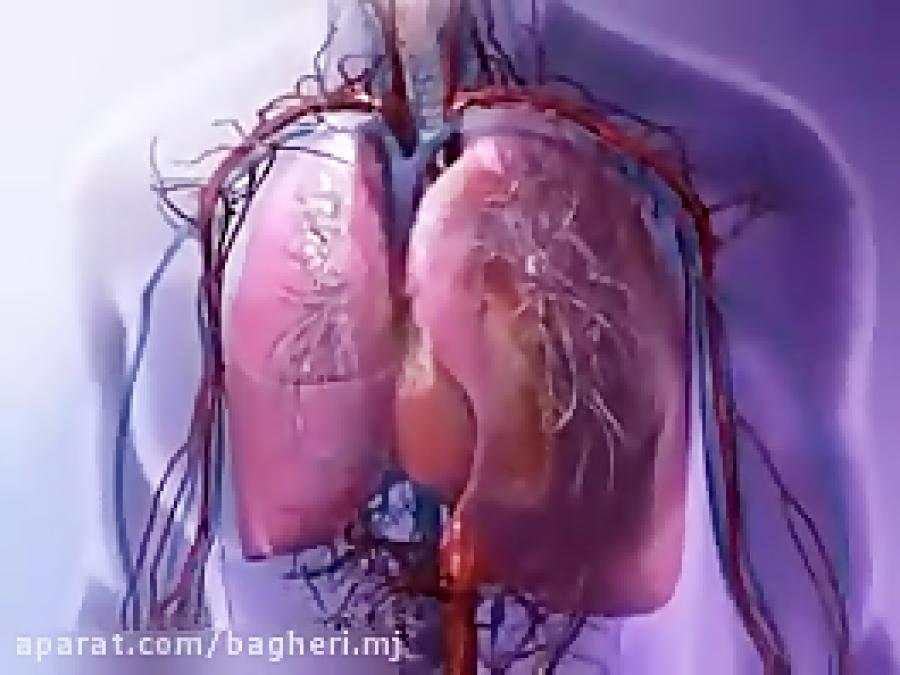 تدریس-مبحث-تنفس-سلولی