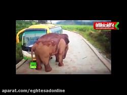 حمله فیل به وسایل نقلیه در استان یون نان چین