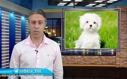 11 گام حرفه ای تربیت سگ - قسمت اول