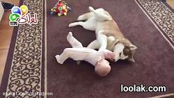 هاسکی و بچه کوچولو