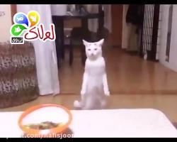 رقص حیوانات 2