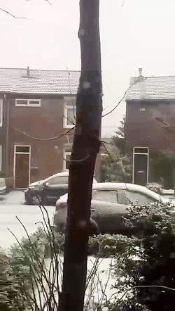 در هلند برف امد (امروز)