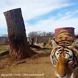 حیوانات بامزه 2