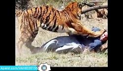 حملات وحشتناک حیوانات وحشی به انسان