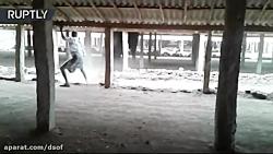حمله فیل خشمگین به فیل بان _ ول کن هم نیست !!!