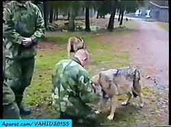 وحشتناک ترین حملات حیوانات وحشی به انسان