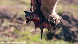 مرگبارترین حمله حیوانا...