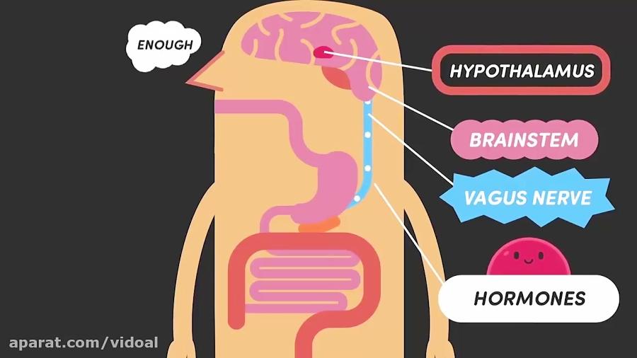 بدن-شما-چه-طور-می-فهمد-که-سیر-شده-اید-ویدوآل