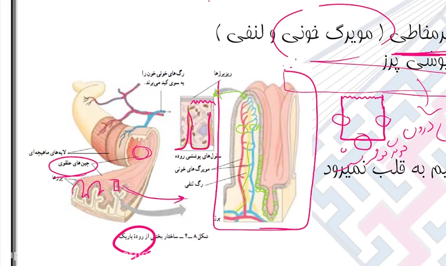ساختار-روده-باریک-تدریس