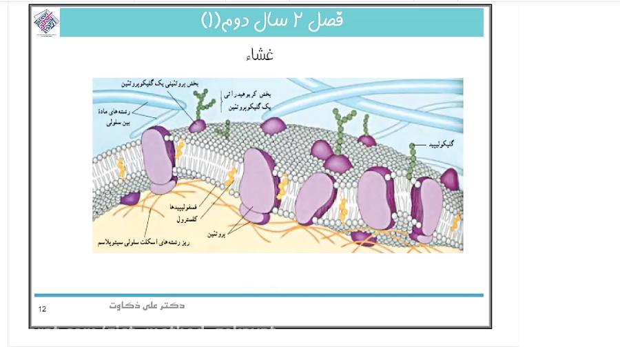 ساختار-غشای-سلول-تدریس