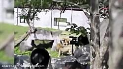 وقتی که حیوانات باغ وحش...