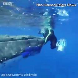 نجات جان یک زیست شناس توسط نهنگ گوژ پشت