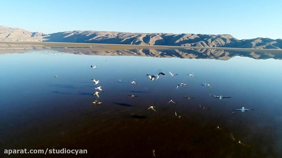 حیات وحش دریاچه هیرم اوز ( لارستان بزرگ )