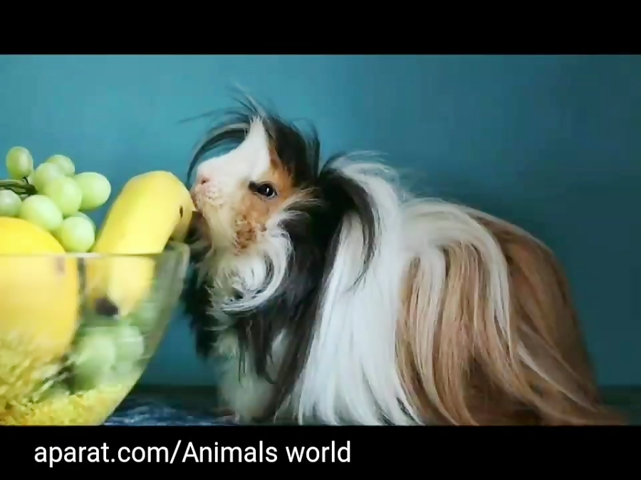 زیبا ترین حیوان دنیا حتما ببینید