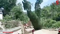 یک درخت بر سر این مرد بیچاره افتاد
