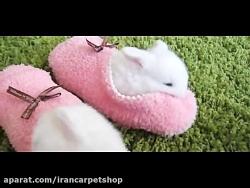 خوکچه های با مزه ( حتما ببینید )