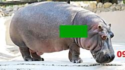 10 حیوان خطرناک دنیا