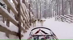 سورتمه سگ های هاسکی