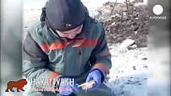 پیدا شدن لاشه و خون یک ماموت در روسیه پس از هزاران سال در دمای منفی ۱۷ درجه سانت