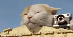 گربه جهانگرد