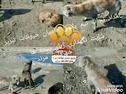 پاتوق حامیان حیوانات تبریز