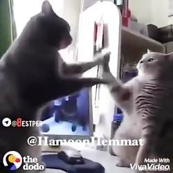 راز بقا - این قسمت:گربه ها