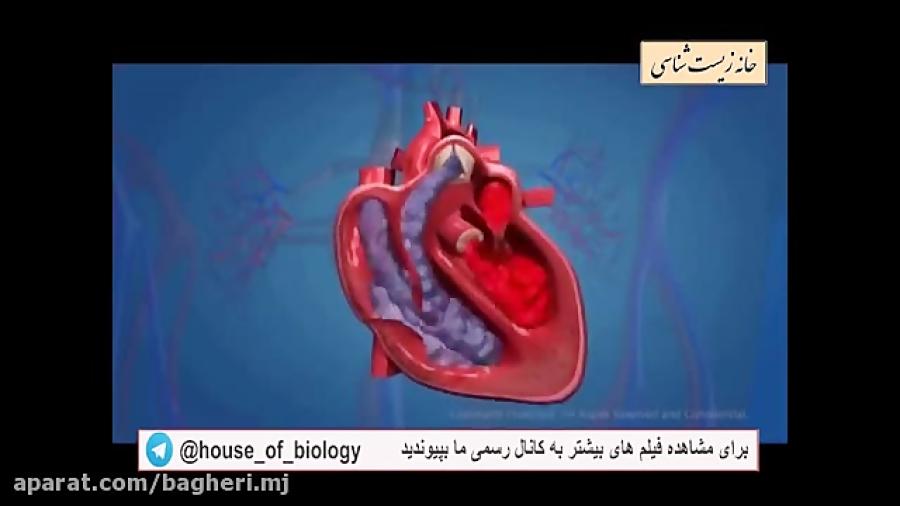 چرخه-ی-ضربان-قلب-تدریس