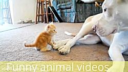 Funny animal videos - funny jokes - short funny jokes - funny cat videos