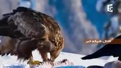 نبرد عقاب ها