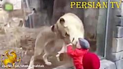 حمله خنده دار حیوانات ب...
